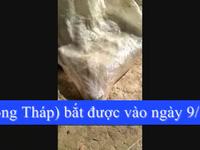Rắn hổ mang chúa nặng 6,3kg ở Đồng Tháp