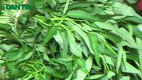 """Vạch mặt thuốc kích phọt Trung Quốc làm rau """"lớn nhanh như thổi"""""""