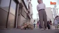 Người đàn ông quanh năm dắt rùa đi dạo