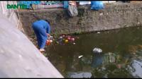 Cận cảnh thủ thuật bắt lại rùa phóng sinh tại chùa Trần Quốc