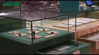 Bảo tàng trưng bày kim cương, sừng tê giác, còng số 8 trong container