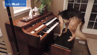 Thú vị cô chó chơi piano