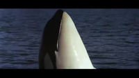 """Trailer """"Free Willy"""" (Giải cứu Willy - 1993)"""