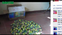 Rao bán pháo nổ tràn lan dịp Tết Ất Mùi 2015