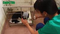 """""""Biệt đội cứu hộ"""" chó mèo độc nhất vô nhị Hà Thành"""