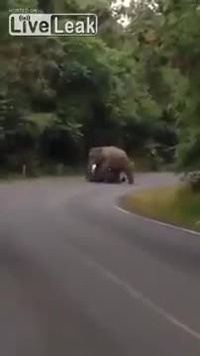 Khiếp hồn voi chặn phá ôtô trên đường