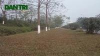 Ngang nhiên dựng lều, trồng cây giữa Đại lộ Thăng Long