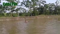 Video giải cứu con bê từ dòng nước chảy xiết