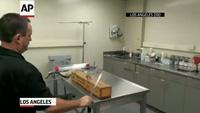 Video về rắn hổ mang bạch tạng vừa bị bắt giữ sau nhiều ngày lẩn trốn: