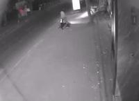 Trộm chó nhanh như chảo chớp ở Thủ đô