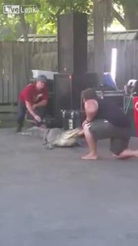 Cá sấu bất ngờ tấn công huấn luyện viên