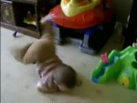 Những tai nạn bất ngờ của bé