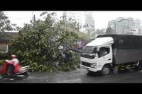 Cây ngã la liệt sau khi cuồng phong quét qua Sài Gòn