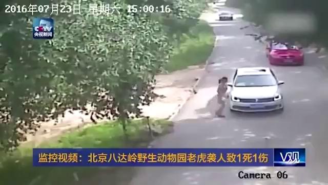Ra khỏi ô tô, 2 phụ nữ bị hổ tấn công trong công viên hoang dã