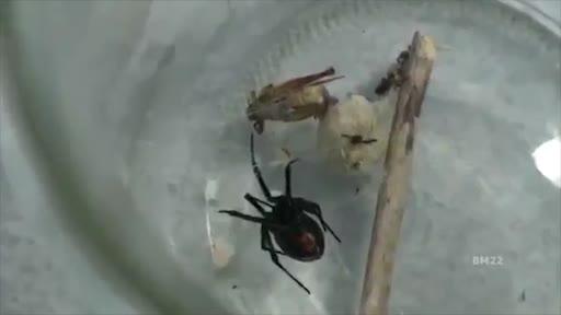 1480059364-spiders-toilet-1480121235560-