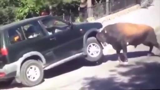 1480316441-bull-car-1480391691105-0f25c.