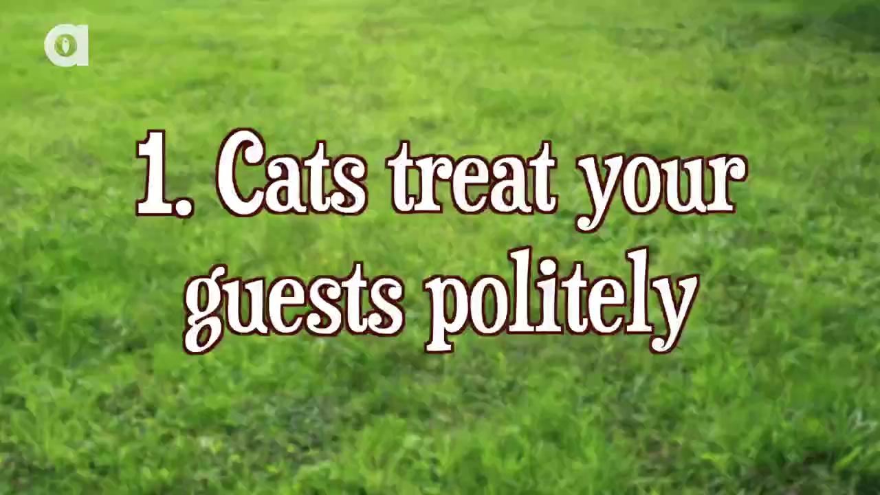 10 lý do chứng tỏ nuôi mèo tuyệt hơn nuôi chó