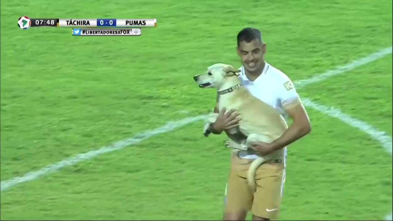 Chú chó tăng động làm gián đoạn cả trận đấu bóng đá