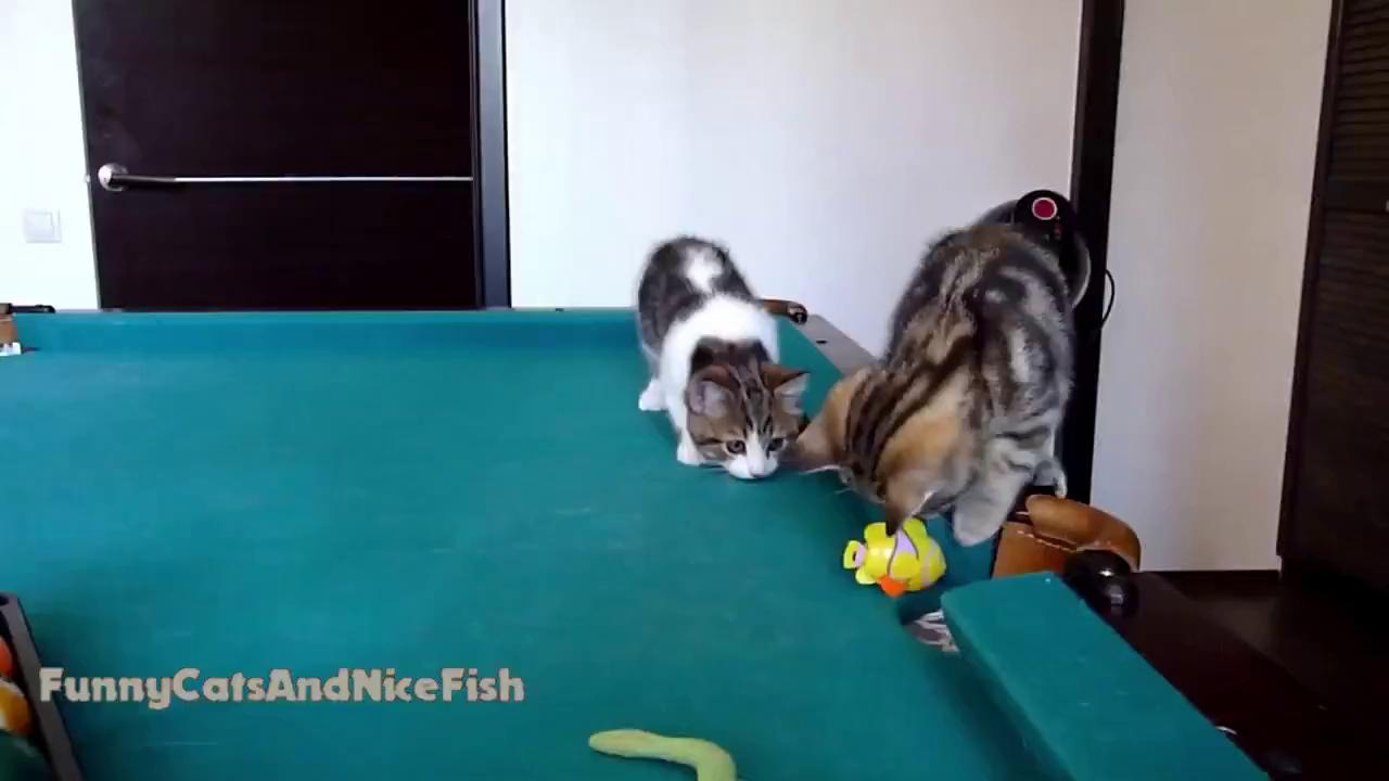 Mèo con ngộ nghĩnh với món đồ chơi mới