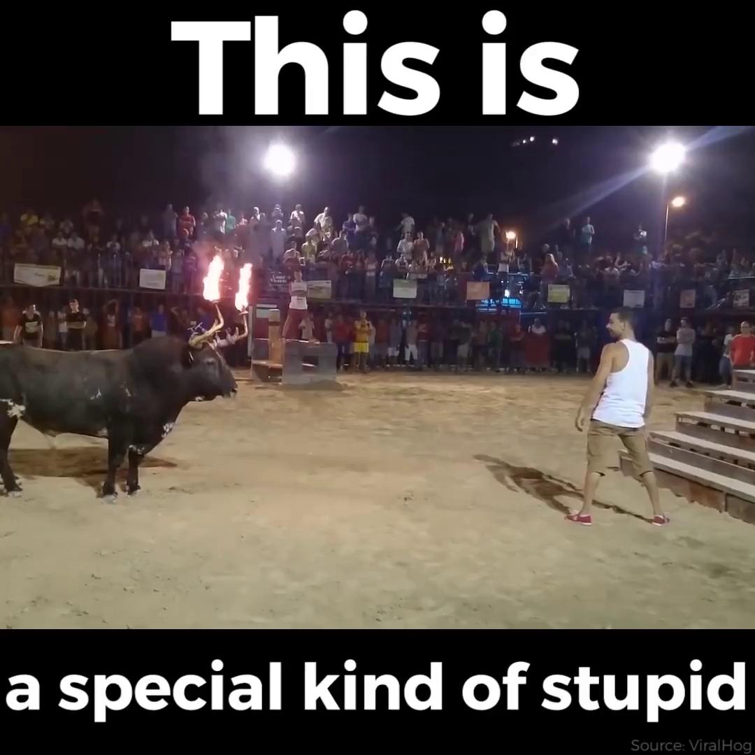 Nhận hậu quả nhớ đời vì vờn với bò húc