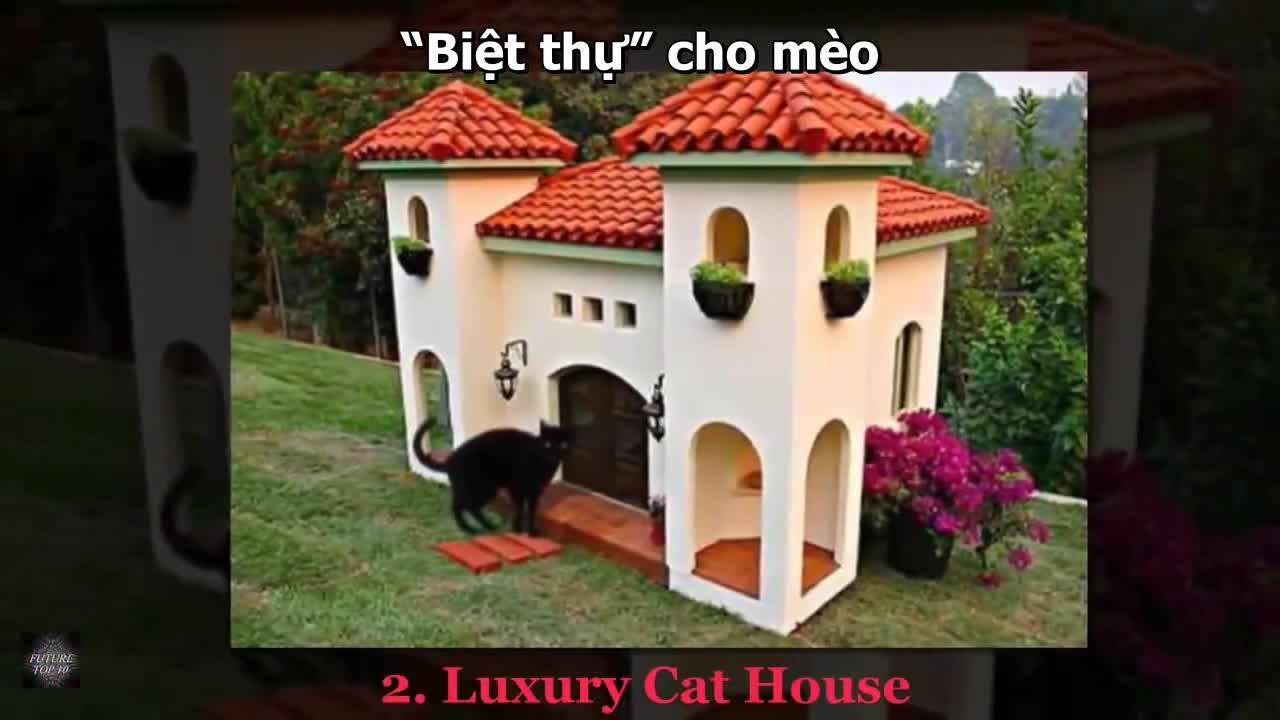 10 ngôi nhà xa hoa cho thú cưng trên thế giới,thú cưng,xa hoa