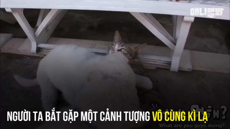 Clip: Hai chú chó con cứ ngỡ mình là mèo, theo mèo mẹ đòi bú sữa