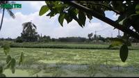Một phụ nữ chết bí ẩn trong hồ trồng rau rút