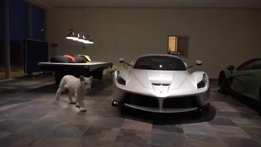 """Đại gia Trung Đông nuôi 2 chú hổ trắng trong gara toàn xe """"xịn"""" (P1)"""