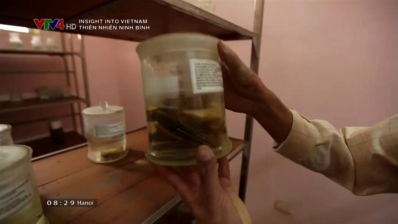 Insight into Vietnam: The nature of Ninh Binh