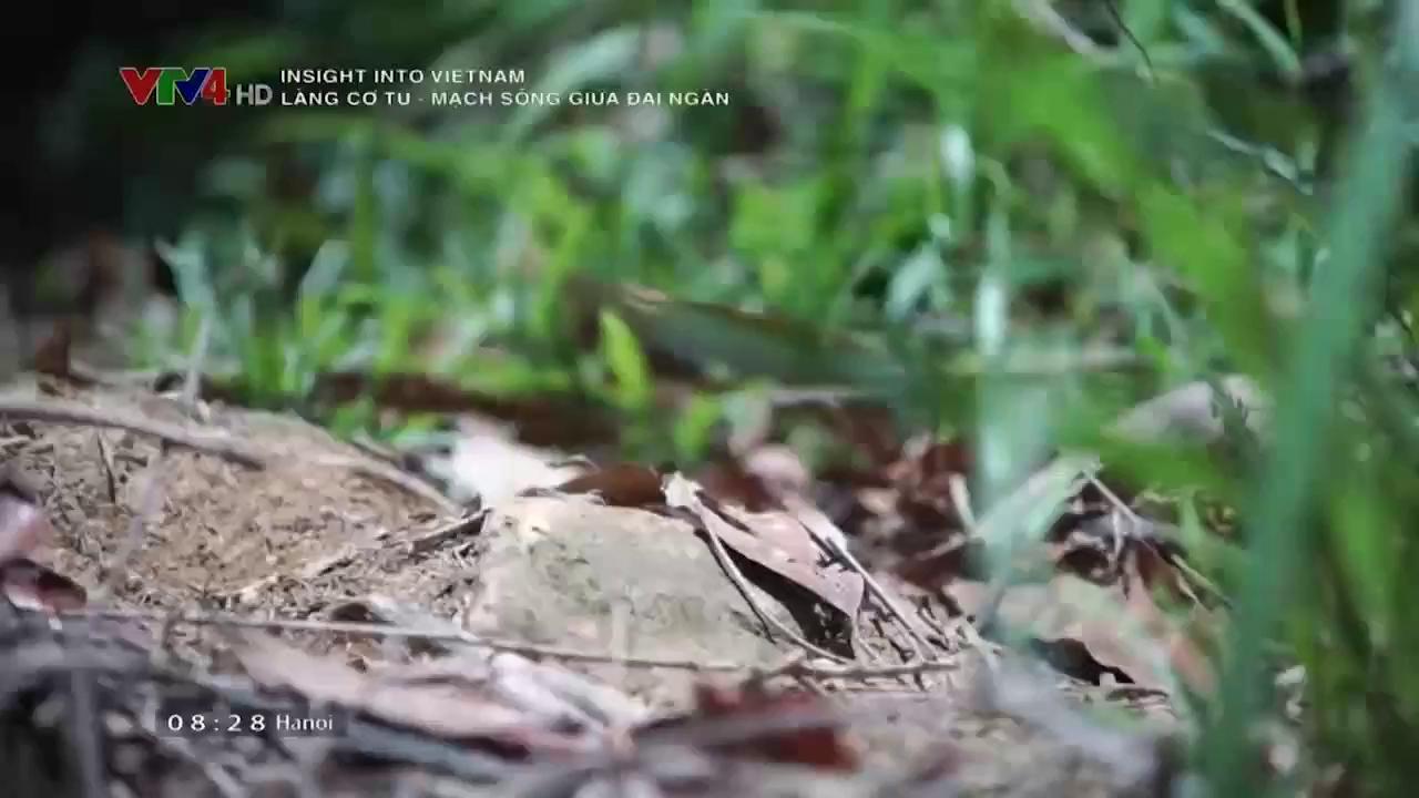Insight into Vietnam: Co Tu Village - Lives in the jungle