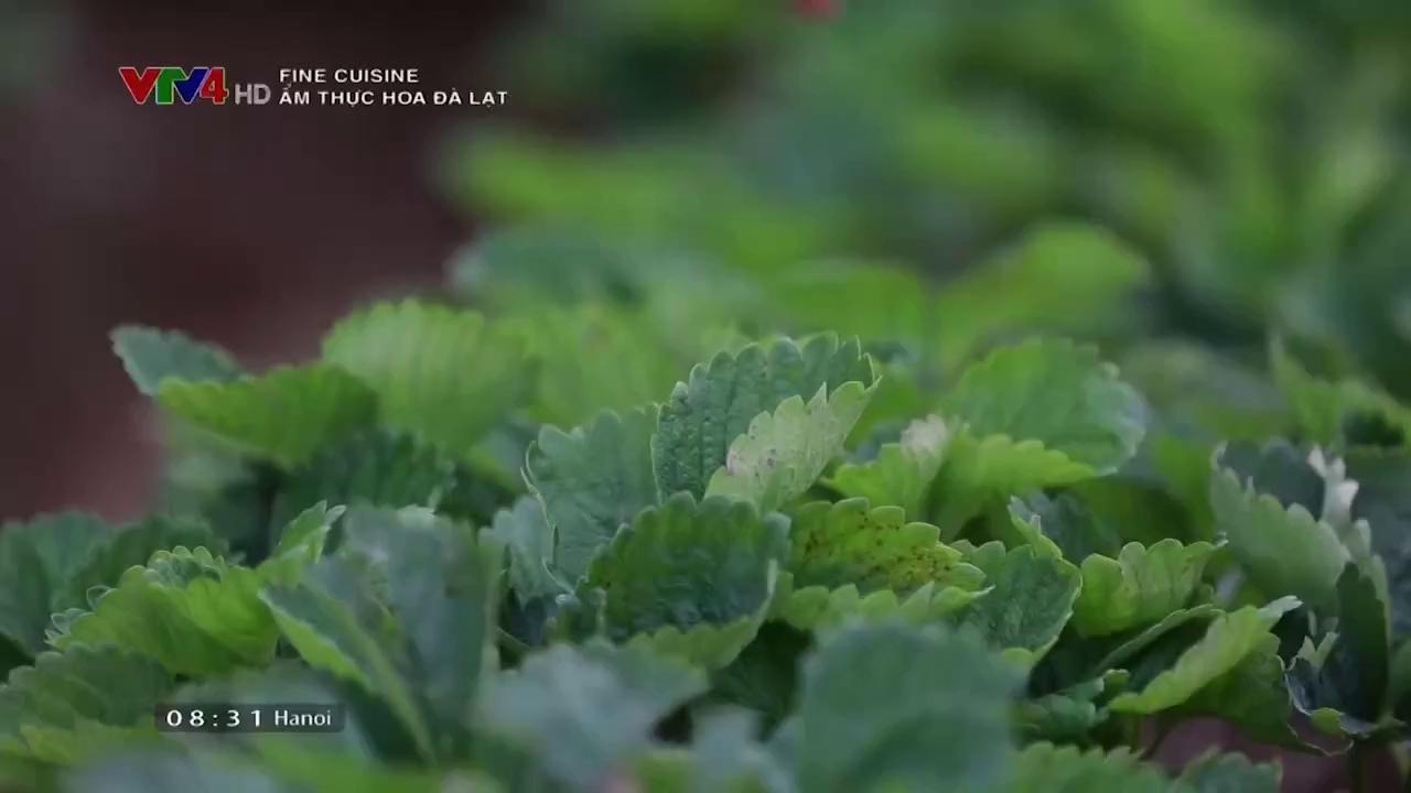 Fine Cuisine: Flower cuisine in Dalat