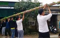 Người dân Hà Tĩnh nô nức trồng nêu đón Tết