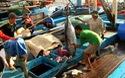 """Bình Định: Ngư dân trúng """"lộc biển"""" ở Trường Sa ngày giáp Tết"""