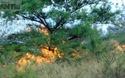Clip Hàng trăm người tham gia chữa cháy rừng phòng hộ ven biển