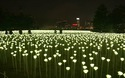 25.000 bông hồng trắng thắp sáng cho ngày Valentine ở Hồng Kông