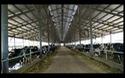 Trang trại bò sữa Vinamilk đạt chuẩn quốc tế Global G.A.P