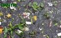 Hà Nội: Cá Hồ Tây chết nổi, người dân vẫn thản nhiên…xả rác