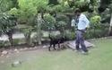 Ngỡ ngàng xem chó mẹ cho hổ con bú