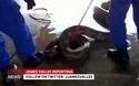 """Trăn """"khủng"""" dài nhất thế giới bị bắt tại Malaysia"""
