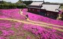 Cụ ông trồng hàng ngàn bông hoa cho người vợ mù