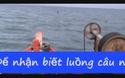 Câu bạch tuộc ở đảo ngọc Phú Quốc