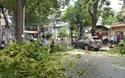 Cây xanh gãy nhánh, đè 2 tô tô giữa trung tâm Sài Gòn