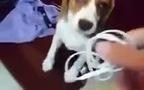 Khuôn mặt tội lỗi của cún khi bị chủ trách móc