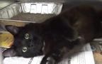 """9 lý do nuôi mèo đen sẽ rất """"tuyệt vời ông mặt trời"""""""