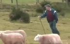 Hàng trăm con cừu xếp hình theo hiệu lệnh tạo chuyển động vô cùng đặc sắc