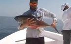 Đây là cách mà cá ngừ đại dương giãy nãy để thoát thân