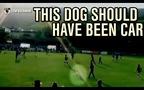 Chú chó xoạc bóng siêu chuẩn, đốn ngã nữ cầu thủ