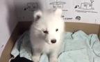 Cún cưng cãi chủ leo lẻo vì bị nhốt