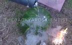 Kết quả đáng kinh ngạc khi đổ nhôm nóng chảy vào trong dưa hấu