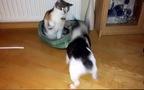 Mèo Vs Cún: Cuộc chiến công lý giành chỗ ngủ